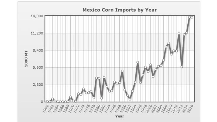墨西哥進口玉米.jpg